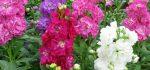 خرید اینترنتی گل   معرفی و آدرس گل فروشی آنلاین